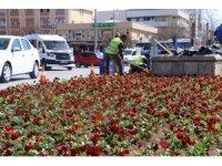 Erzincan'da binlerce çiçek toprakla buluşturuluyor