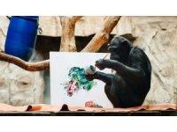 Şempanze ressam oldu, eserleri açık arttırmaya çıkacak