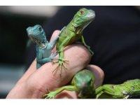 - Bursa Hayvanat Bahçesi'nin sevimli yavruları dünyaya geldi