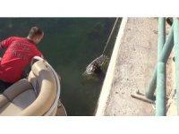 Fırat Nehri'ne düşen 2 köpek tekneyle kurtarıldı