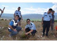 Kargı'da 15 Temmuz Şehitleri için 250 fidan dikildi