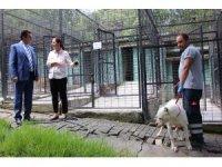 Osmangazi Belediyesi sokak hayvanlarına sahip çıktı