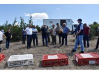 Dursunbey'de kınalı keklik salımı yapıldı