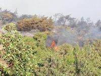 Hatay'da orman yangınında soğutma çalışmaları başladı