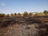 Kaynak makinesinden çıktığı iddia edilen yangın zeytin ağaçlarını küle çevirdi