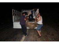 Alkollü sürücü çobana ve koyunlara çarptı
