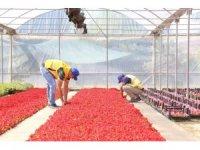 Büyükşehir belediyesi kendi yetiştirdiği çiçeklerle Aydın'ı güzelleştiriyor