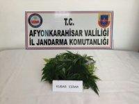 Jandarma ekiplerinden uyuşturucu ve tarihi eser operasyonu