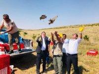 Yozgat'ta bin keklik doğaya salındı