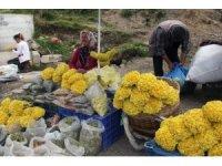 Giresun yaylalarında yetişen bitkiler yöre halkının geçim kaynağı