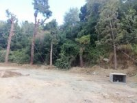 Otopark inşaatı için sökülen 40 ağaç nakledildi