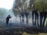 Bingöl'de anız yangını ağaçlara sıçradı