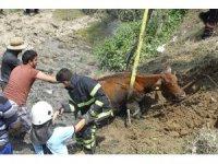 Dereye batan inek bir buçuk saatte kurtarıldı