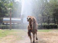 Hayvan Parkı'ndaki hayvanlara sıcak ayarı