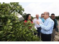 """Vali Demirtaş: """"Akdeniz meyve sineğine karşı tüm tedbirleri aldık"""""""