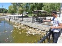 Kahramanmaraş'ta gölette yaşayan balıklar telef olmaya başladı