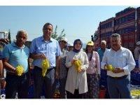 Buldan'da sezonun ilk üzüm hasadı
