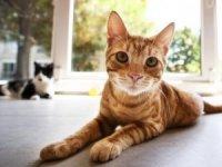 Kedilere özel rehabilitasyonlu otel