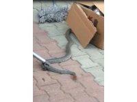 İki metrelik yılan fabrikada dehşet saçtı