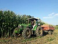 Edirne'de mısır silajı zamanı