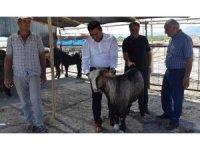 Mersin'de kurban satış yerleri denetlendi