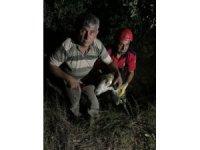 Kuyuya düşen kurbanlık koyunu itfaiye kurtardı