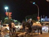 Faytona koşulan at yol ortasında yığıldı, hayvanseverler tepki gösterdi