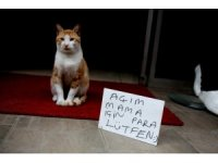 Sokak kedisi 'Anderson' kendi mama parasını kendisi kazanıyor