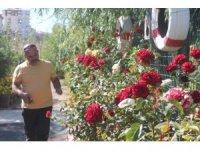 Bataklık olan alanı Atatürk sevgisi sayesinde botanik bahçesine dönüştürdü