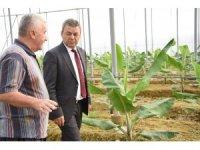 Antalya'da muz üretimi 5 yılda yüzde 177 arttı