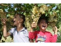 Üzümde bereket yılı, Türkiye'nin yarısı Elazığ'dan ürün alıyor