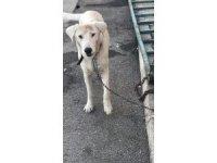 Altındağ Belediyesinin şefkatli eli bir sokak köpeğini daha kurtardı