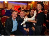 En güzel kedi Azra 10 bin TL ödül kazandı