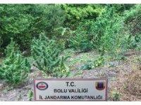 Bolu'da uyuşturucu operasyonu: 6 gözaltı