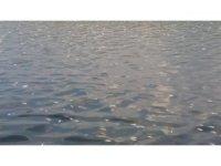 Asi Nehri'nde binlerce ölü balık sahile vurdu