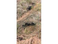 Bolu'da yavru köpekleri tüfekle vurdular