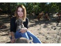 Bahçesinde sokaklardan kurtardığı 100 köpeğe bakıyor