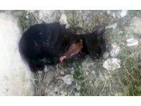 Sakarya'da ön iki ayağı kesilen kedi tedavi altına alındı