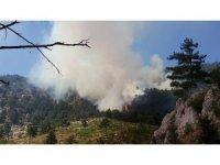 Adana'daki orman yangınında 3 hektar ormanlık alan kül oldu