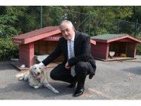 Başkan Aydın'dan sokak hayvanları açıklaması