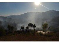 Adana'da yangında 2 hektarlık orman zarar gördü