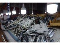Balıkçıların gözü hamside