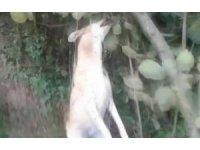 Tavuklarını yediği iddiasıyla köpeği iple ağaca asarak öldürdü