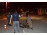 Hamile atı sokak ortasına ölüme terk ettiler