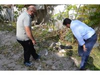 Ağaca asılı halde bulunan köpek ölmek üzereyken bulundu