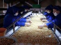 Fındık ihracatında yeni hedef Latin Amerika