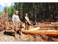 Orman işçisi ailelerin atalarından kalma zorlu hayat mücadelesi
