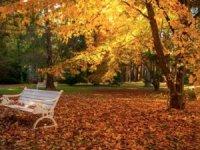 Sonbahar yaprakları 3 gün süpürülmeyecek