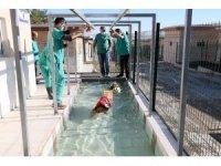 Köpekler için fizik tedavi merkezi ve terapi havuzu