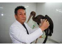 Manisa'da yaralı bulunan kara leylek tedaviye alındı